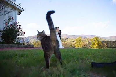 Un gato sorprendido por la retaguardia.