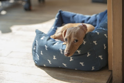 natural cleaning powder for dog beds