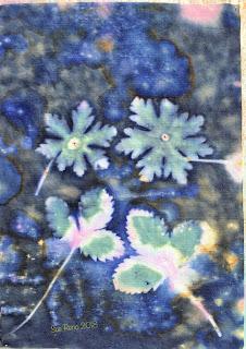 Wet cyanotype_Sue Reno_Image 282