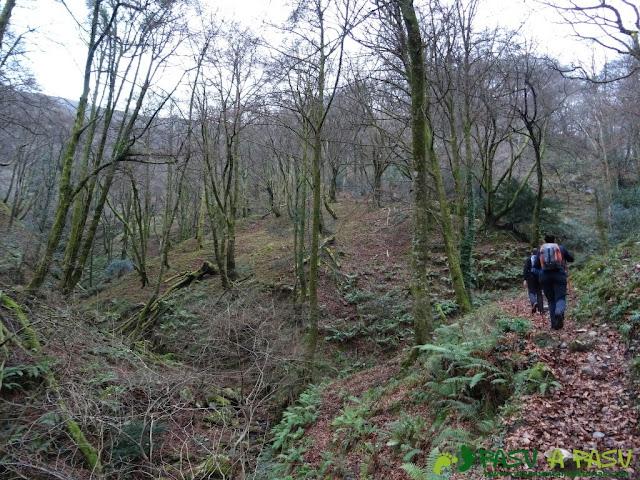 Ruta al Pico Gobia y La Forquita: Por el Hayedo de la Biescona