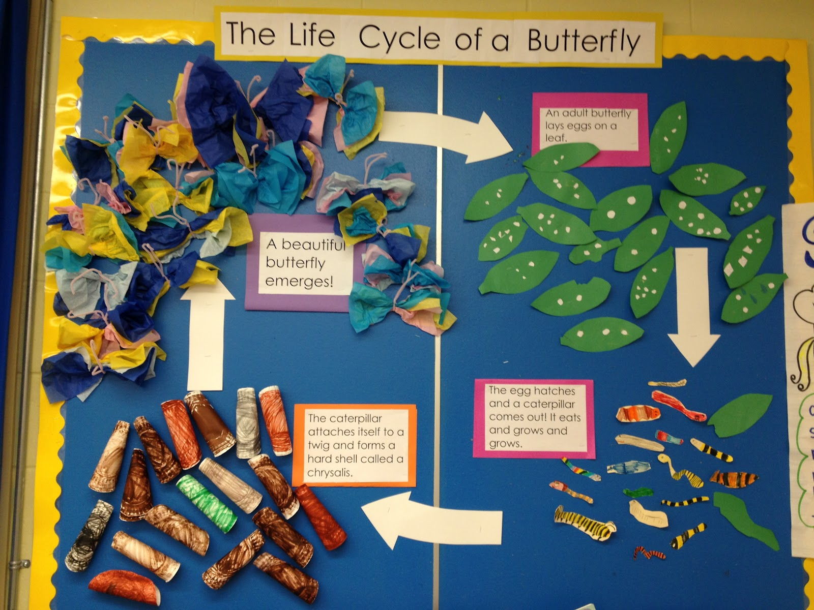 Life In Grade One Living Things And Mothers