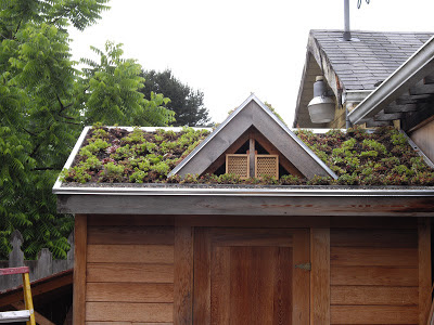 Our Little Green Roof Shows Amazing Potential