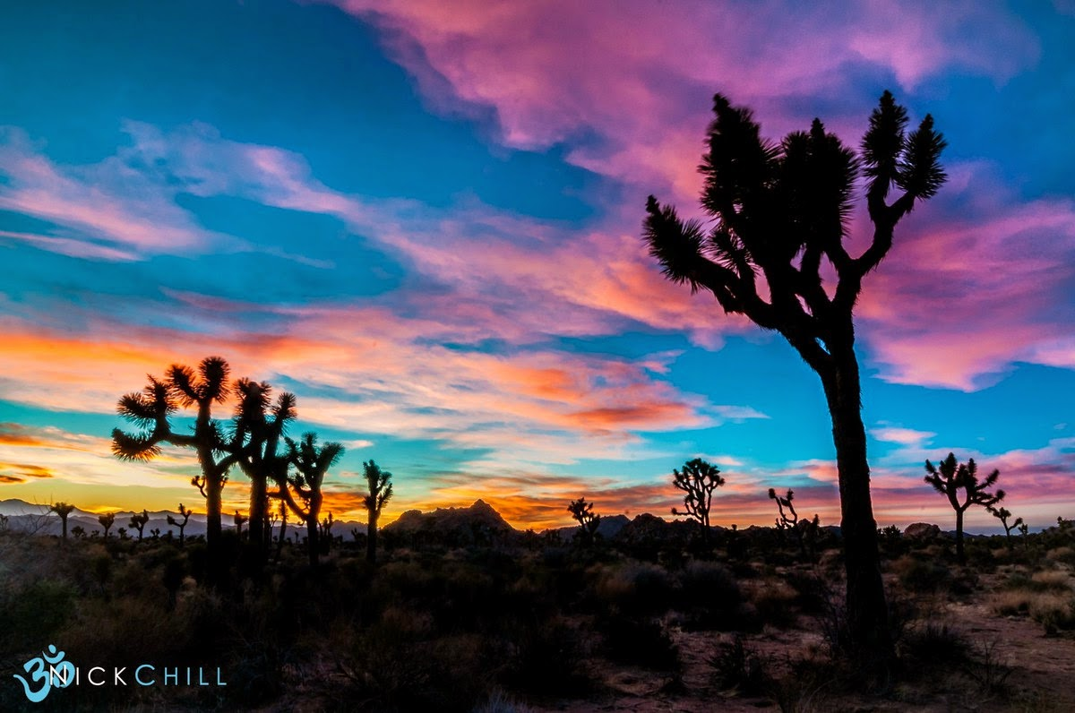 shine brite zamorano: joshua trees and sunset skies.