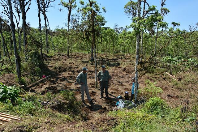 Santa Cruz Planting Trees