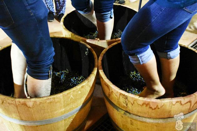 la pisada de la uva en las Bodegas Señorío de Val Azul