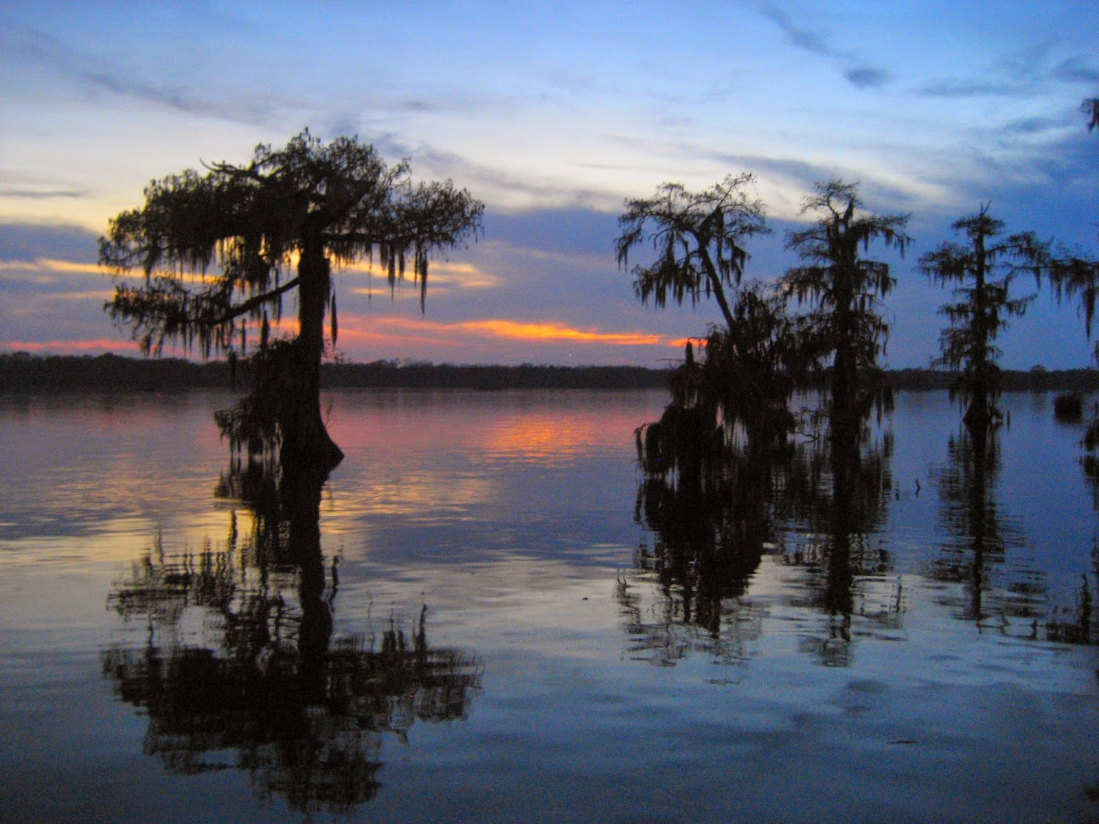 Living Rootless Lake Martin Sunsets and Gators