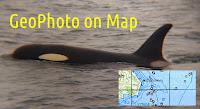 Косатка, Killer whale (Orca), геотеги геофотот фото с геотегами GPS-координаты в EXIF метаданных