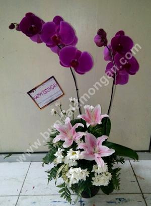 Arti Warna Bunga Anggrek yang dijual di Toko Bunga Lamongan