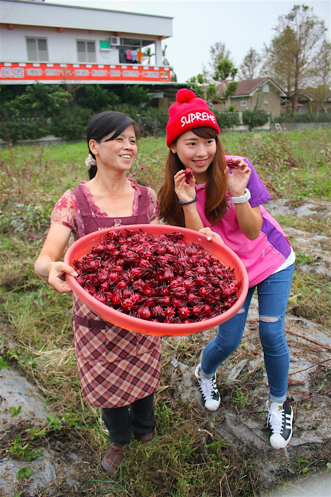 Taiwan Farmstay 2 of 5: Fairy Story Village Organic Farm in