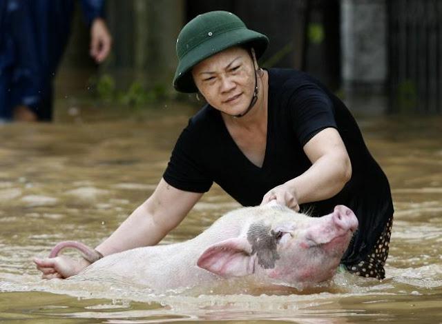 Đây chính là minh chứng cho tình yêu vô điều kiện mà con người dành cho những loài vật xung quanh