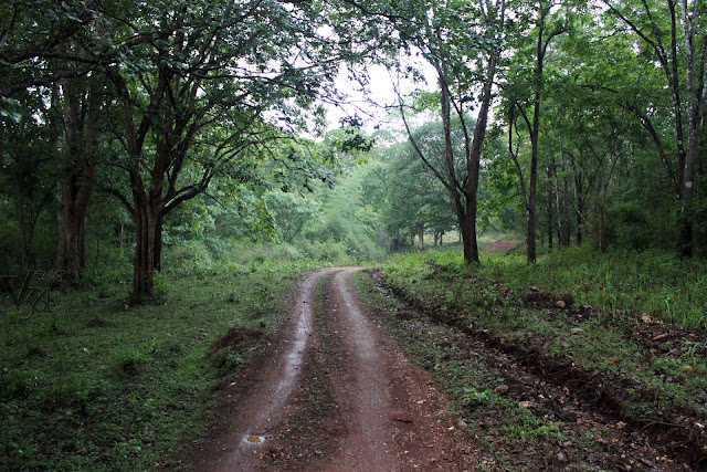 Jeep Safari Route in Bhadra Wildlife Sanctuary