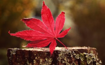 Wallpaper: One of the Autumn symbols