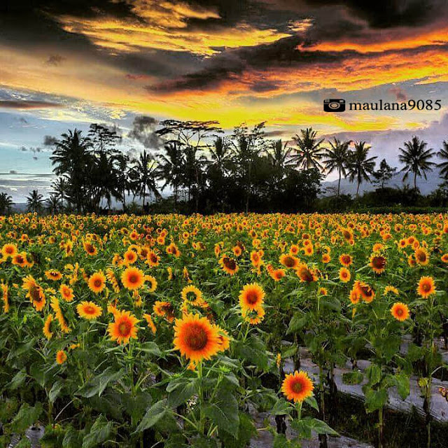 taman dewari magelang sunset