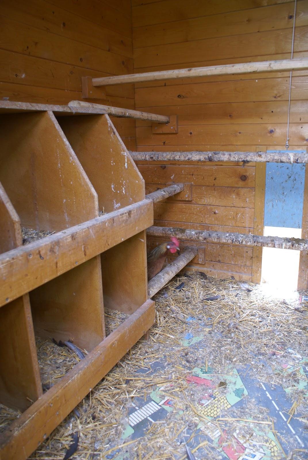 tutobrico grand poulailler en bois sur pilotis. Black Bedroom Furniture Sets. Home Design Ideas