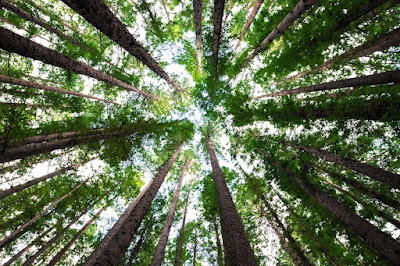 Létezik a fák közötti barátság, sokszor együtt is halnak meg