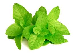 Health Benefits of Mint Leaves