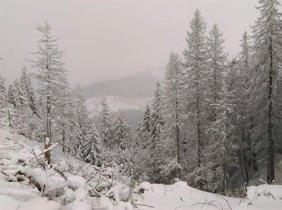 Szlak na Sarnią Skałę w zimowej scenerii
