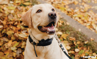 Moderate Your Family Dog Using The Barking Dog Collar