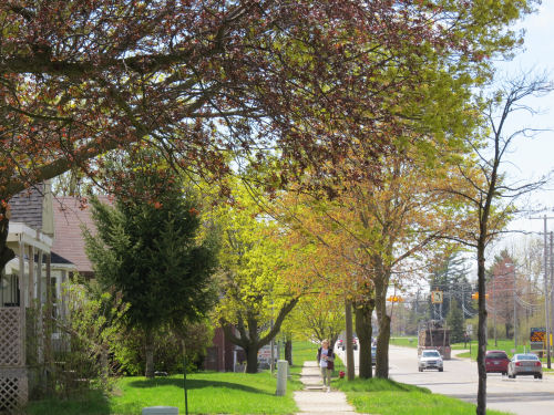 city street with springtime trees