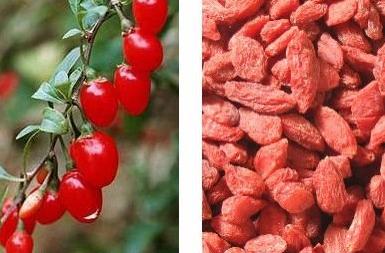 mengatasi ejakulasi dini dengan herbal terbaik fahmy ramdani