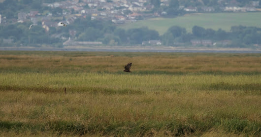 Hen Harrier Day Parkgate 2018