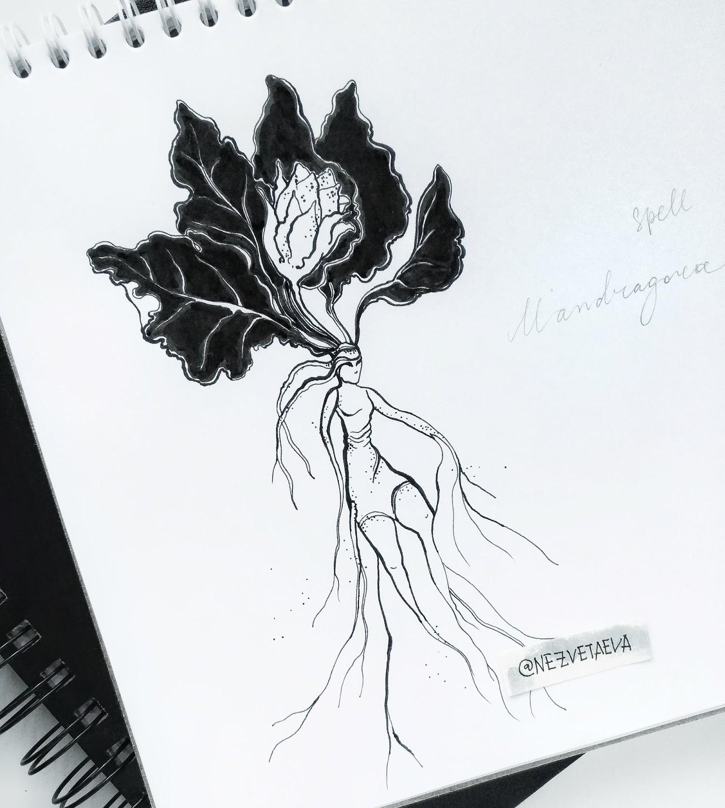 sonia-nezvetaeva-inktober2018-mandragora-dotwork-sketch