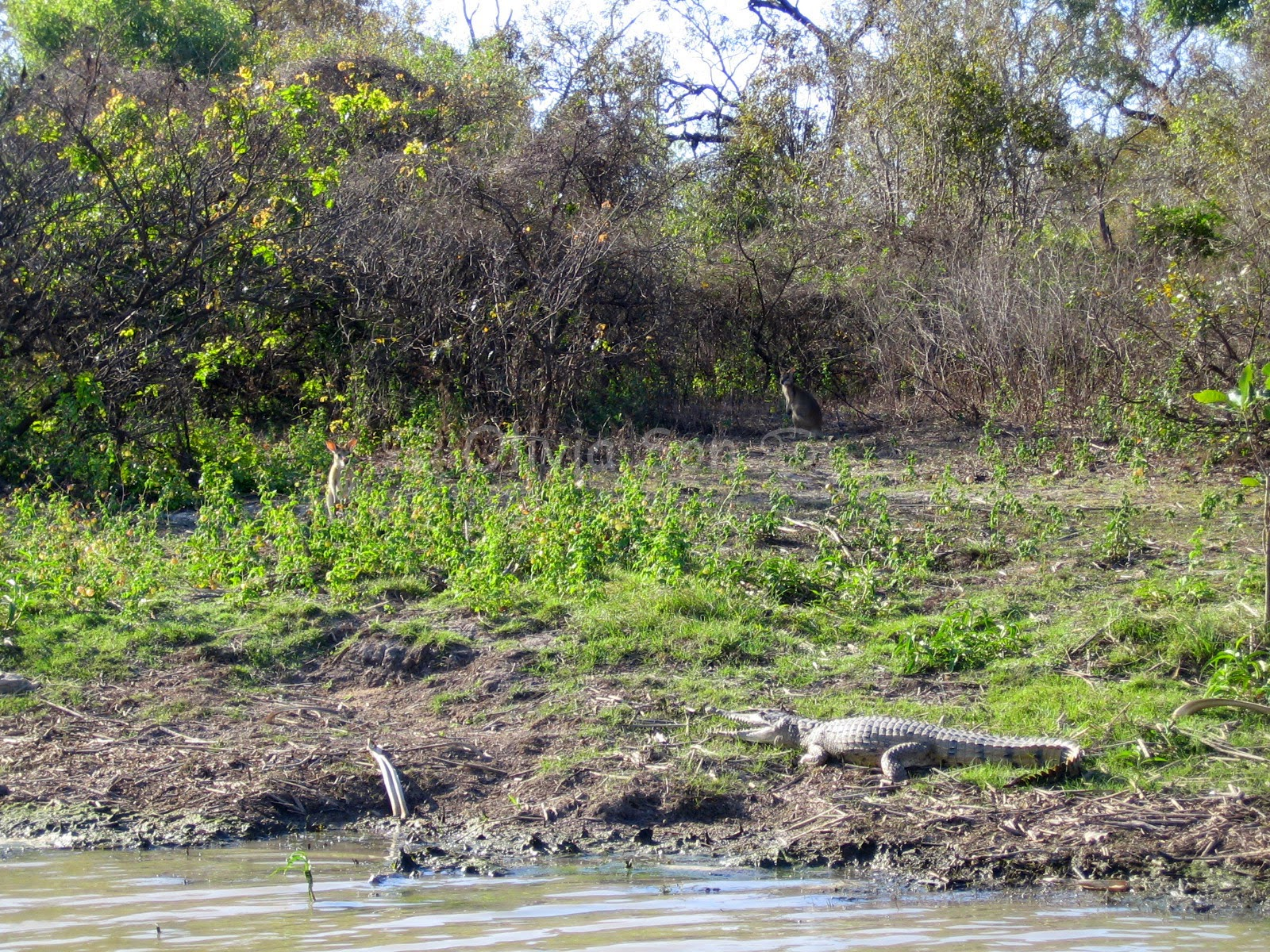 Crocodile Kakadu National Park, Northern Territory, Australie