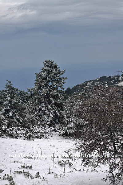 Snow on Mt. Aenos, Kefalonia