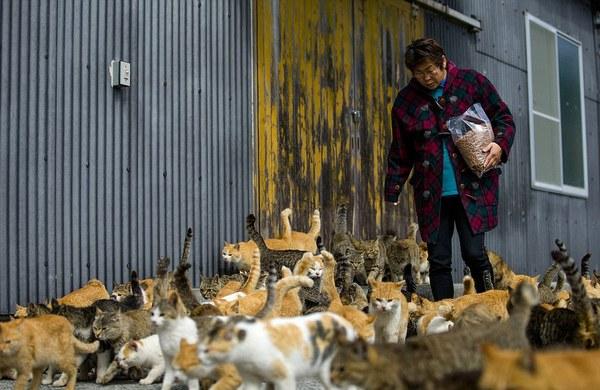 aoshima japan cat island