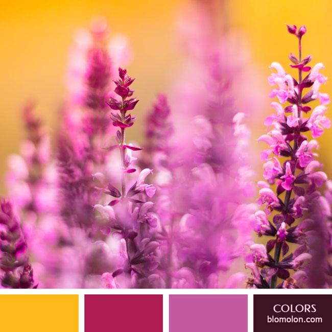variedad_en_color_color_57