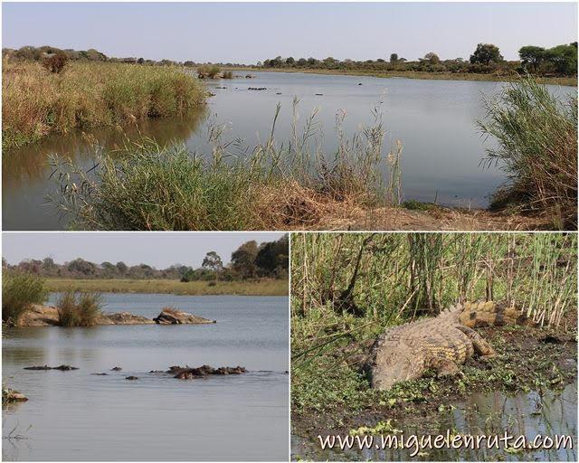 Hipopotamos-cocodrilos-safari-Kruger