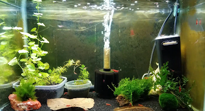 10-gallon aquarium for breeding red cherry shrimp