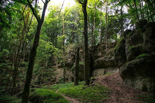 Königstein Rundwanderweg Nr. 18  Steinberg-Rundweg  Amberg-Sulzbacher Land 07