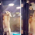 Lonely Puppy Was Left In The Pet Store At Night… Then Cameras Catch The Kitten Doing THIS…