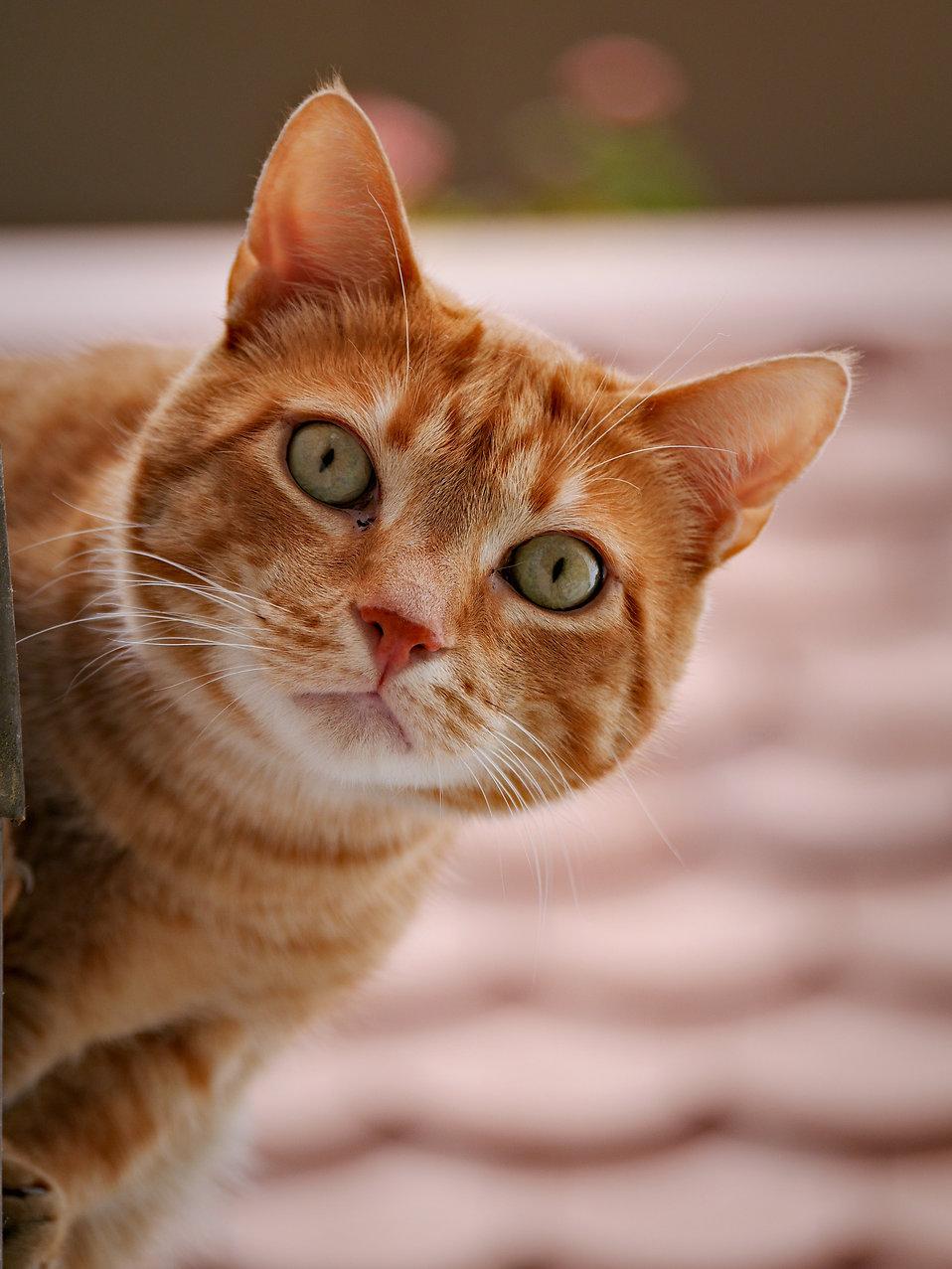 big cat rescue wisconsin