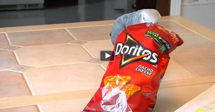 We Heart Parrots: Doritos commercial- Gimmie Gimmie!