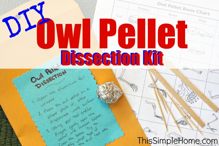This Simple Home: Homemade Owl Pellet Dissection Kit