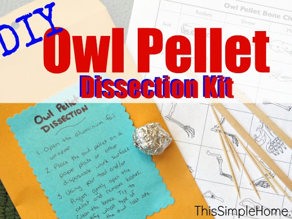 Homemade Owl Pellet Dissection Kit