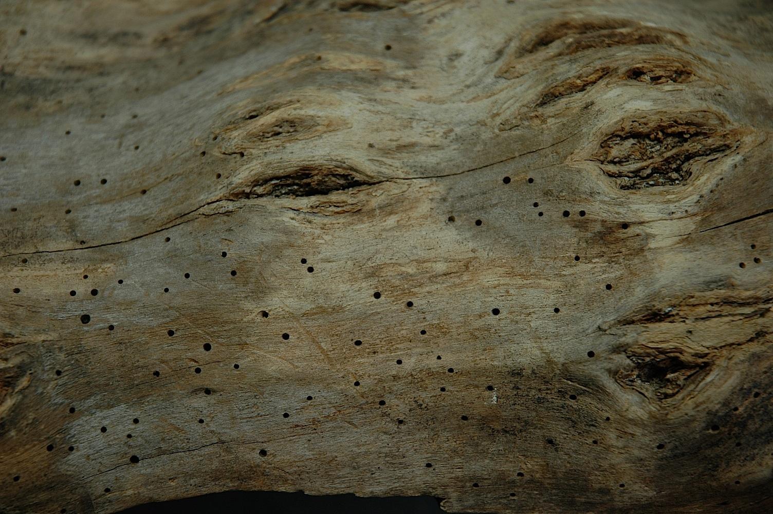 Field Biology In Southeastern Ohio What S In A Log