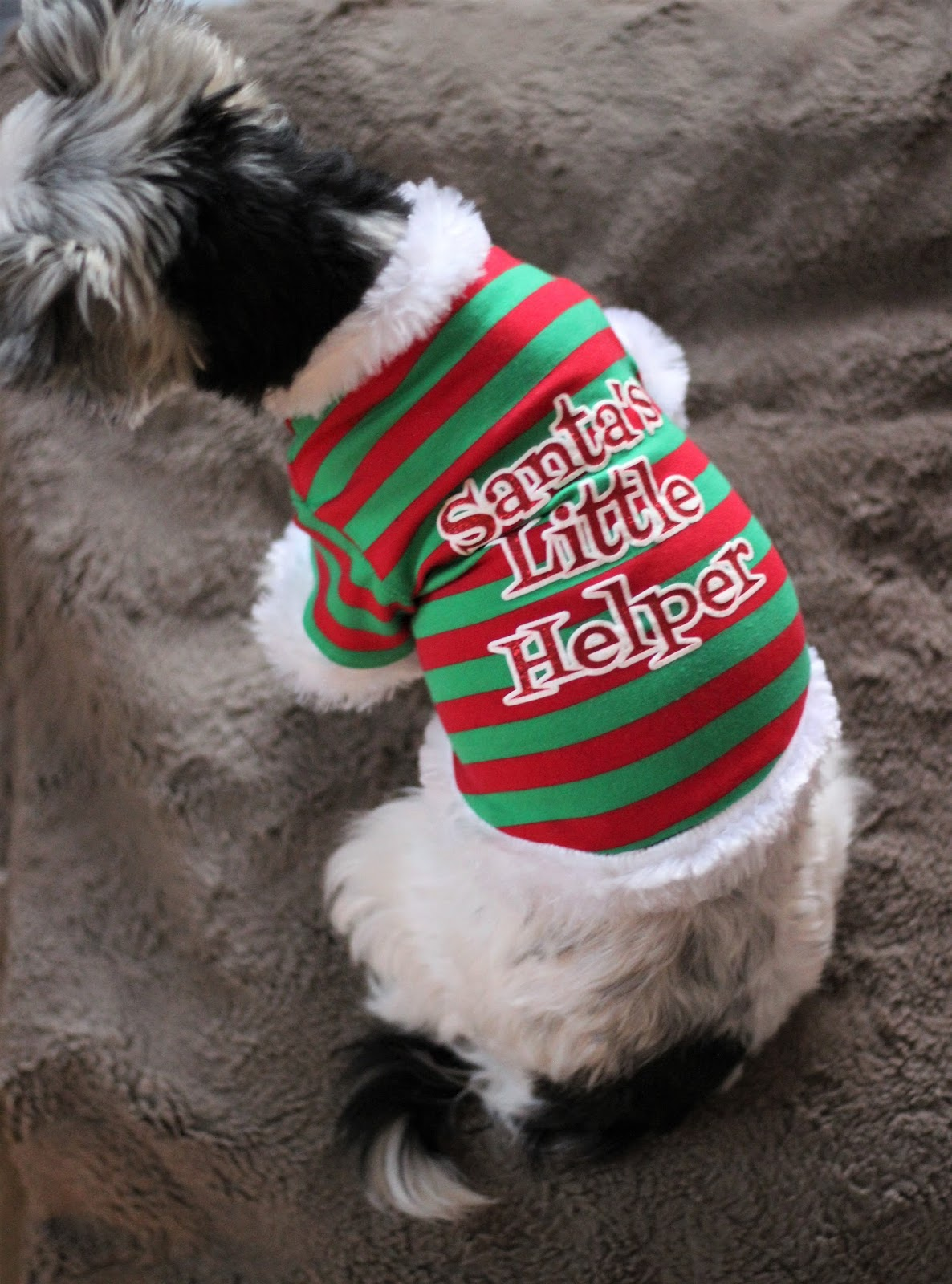christmas-dog-clothes