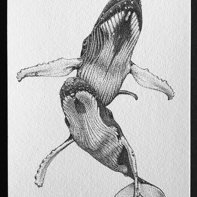09-Humpback-Whales-María-Lecanda-www-designstack-co