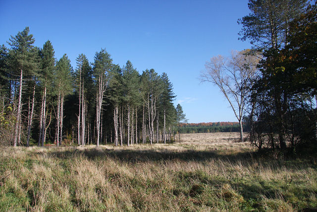 5 Useful Tips on Choosing the Best Holiday Cottage in the Forest