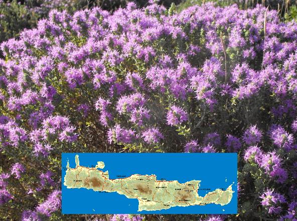 Πωλείται μέλι: Θυμάρι Κρήτης