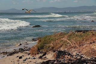 Der Atlantik in Kapstadt