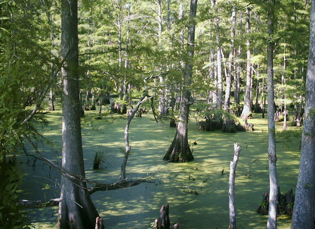 new orleans swamps