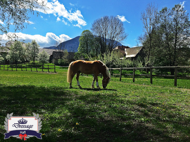 Creating the Best Conditions for a Quality Horse Pasture