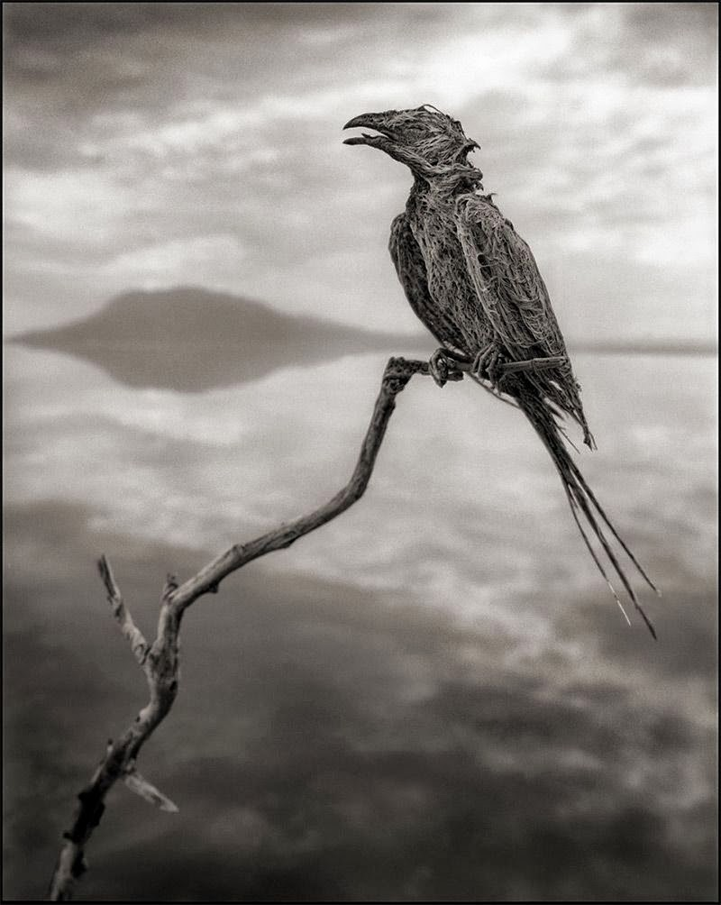 بحيرة الموت بحيرة يتحجر كل من يقترب منها