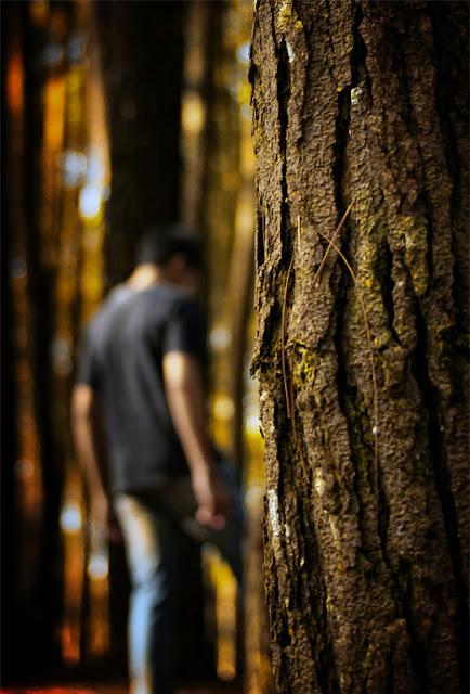 Jogja Seksi 2: Hutan Pinus Imogiri. Enggak Sekedar Tempat Yang Bagus Buat Foto-Foto! Bisa Lihat Sunrise Keren!