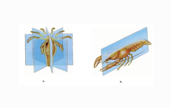 Image of: Plantae Kesimetrisan Tubuh Ilmu Dasar Kingdom Animalia Pengertian Ciri Struktur Klasifikasi Ilmu Dasar