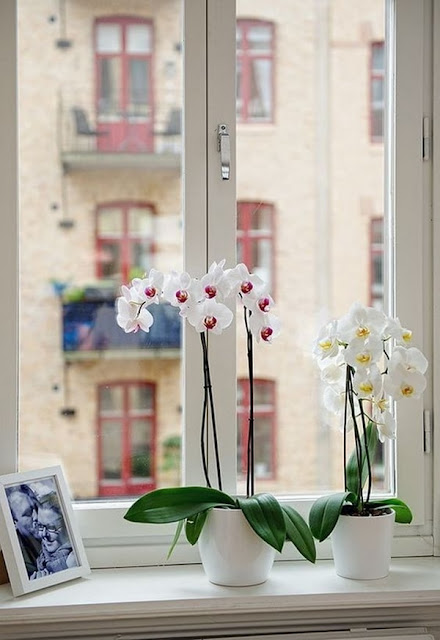 Ideas To Decorate Interiors With Plants 6